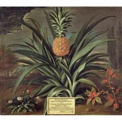Panneau Pineapple